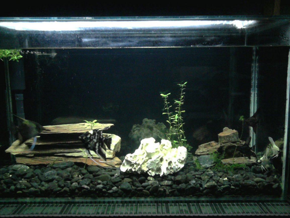 30 gallons freshwater fish tank (mostly fish and non-living decorations) - Angelfish tank