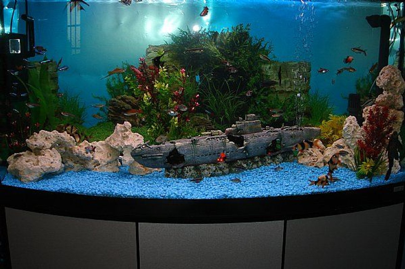 165 gallons freshwater fish tank (mostly fish and non-living decorations) - 70 Gal Community tank