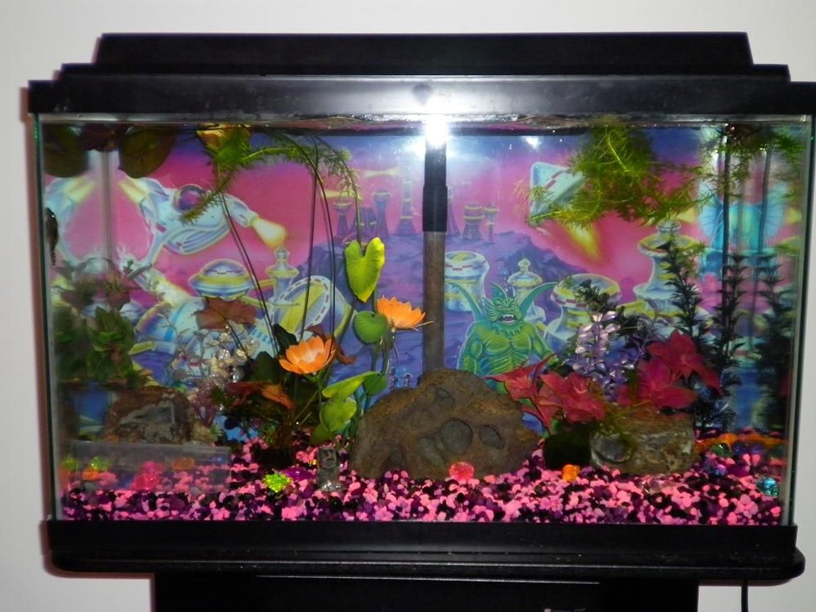 29 gallons freshwater fish tank (mostly fish and non-living decorations) - 29g freshwater with mostly artificial plants and some live ones. Fish include an African butterfly fish, a blue angelfish, 5 cories, a bushynose pleco, a crayfish, and a snail.