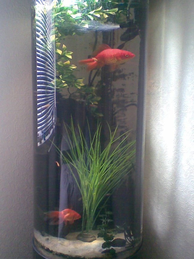36 gallons freshwater fish tank (mostly fish and non-living decorations) - The new guy Nelson with Gary.