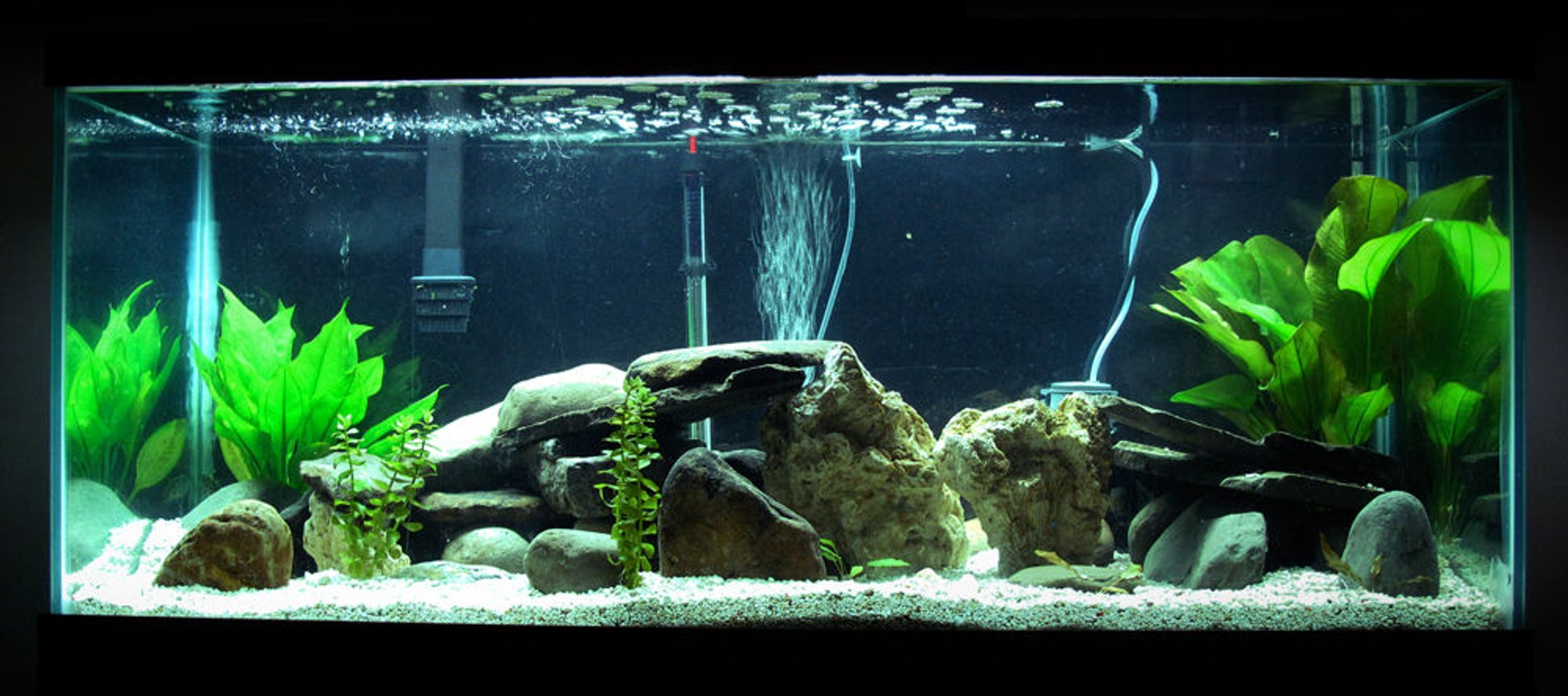 75 gallons freshwater fish tank (mostly fish and non-living decorations) - This is my newest set up. With rocks, plants and hidden are a managuense, dovii, jack dempsey, figure eight puffer, green spotted puffer, pleco and a cat.