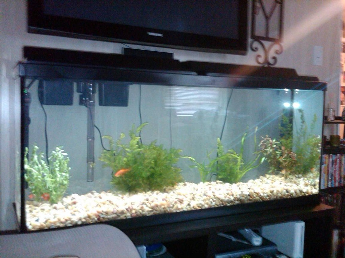 55 gallons freshwater fish tank (mostly fish and non-living decorations) - TANK