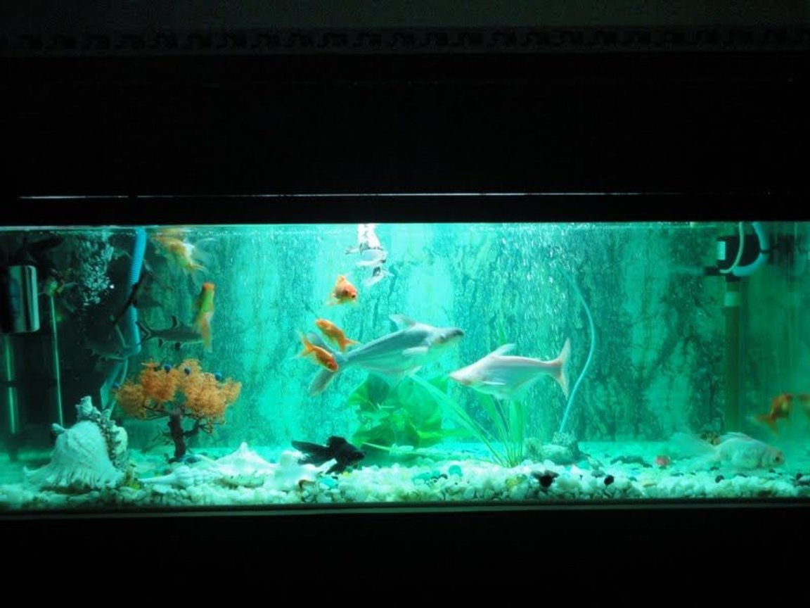 68 gallons freshwater fish tank (mostly fish and non-living decorations) - new setup with green florocent aqua light