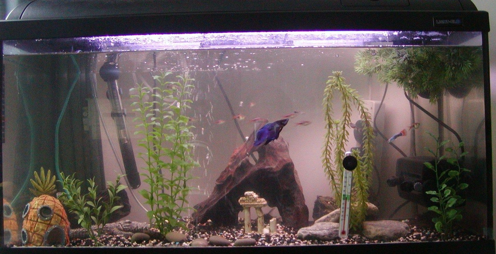 30 gallons freshwater fish tank (mostly fish and non-living decorations) - 30 Gallon tank.
