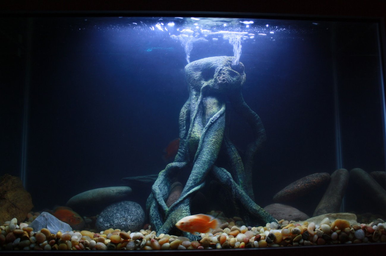29 gallons freshwater fish tank (mostly fish and non-living decorations) - another shot