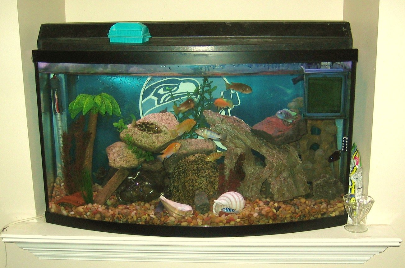 45 gallons freshwater fish tank (mostly fish and non-living decorations) - my tank located in the nook above my gas fireplace insert in the livingroom. GO SEAHAWKS!!!