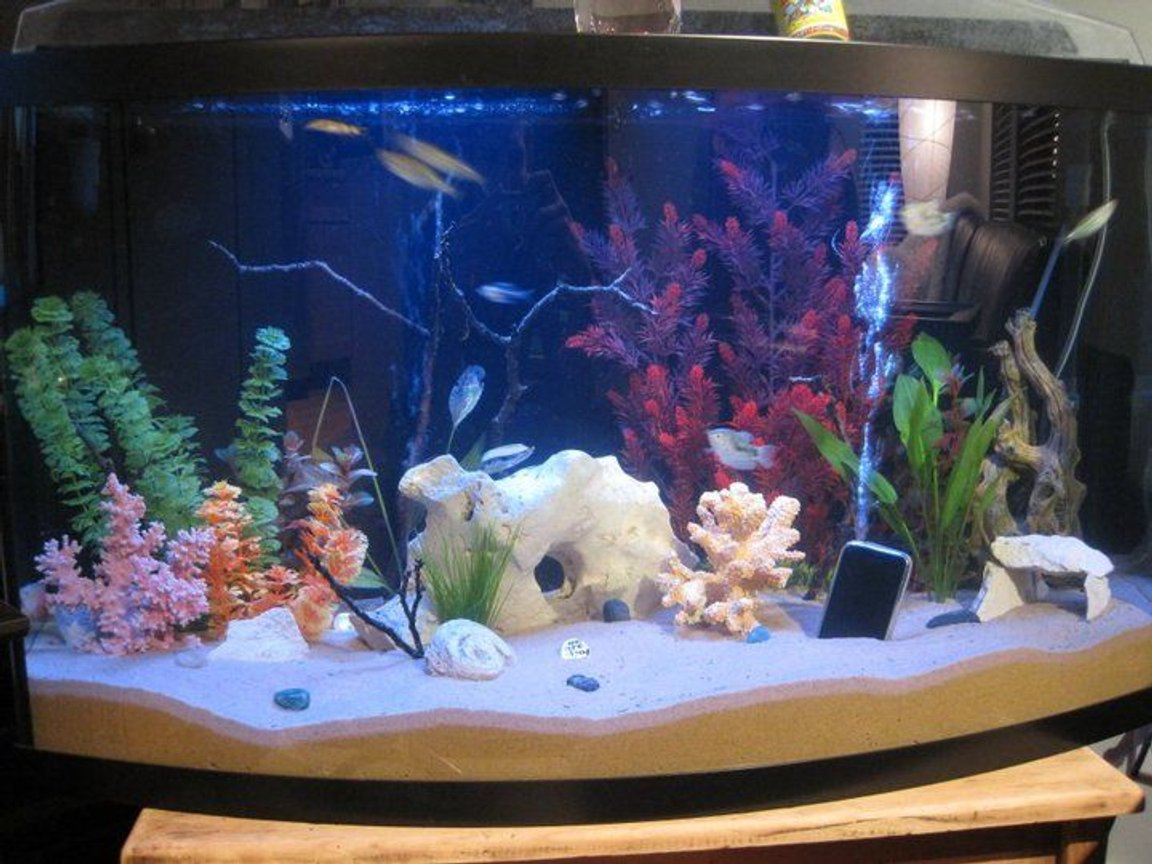 55 gallons freshwater fish tank (mostly fish and non-living decorations) - 55 Gallon Bowfront