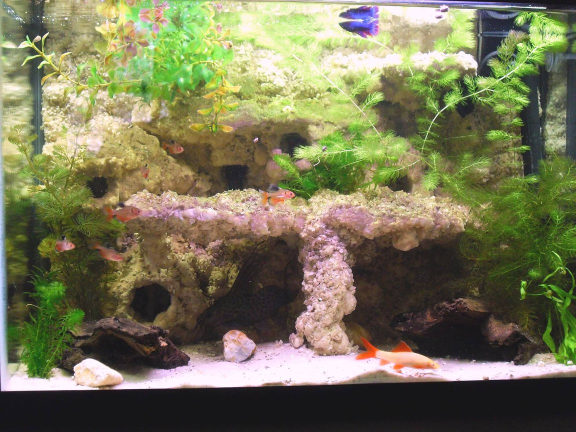 20 gallons freshwater fish tank (mostly fish and non-living decorations) - 20 gal after a few months and some algae.