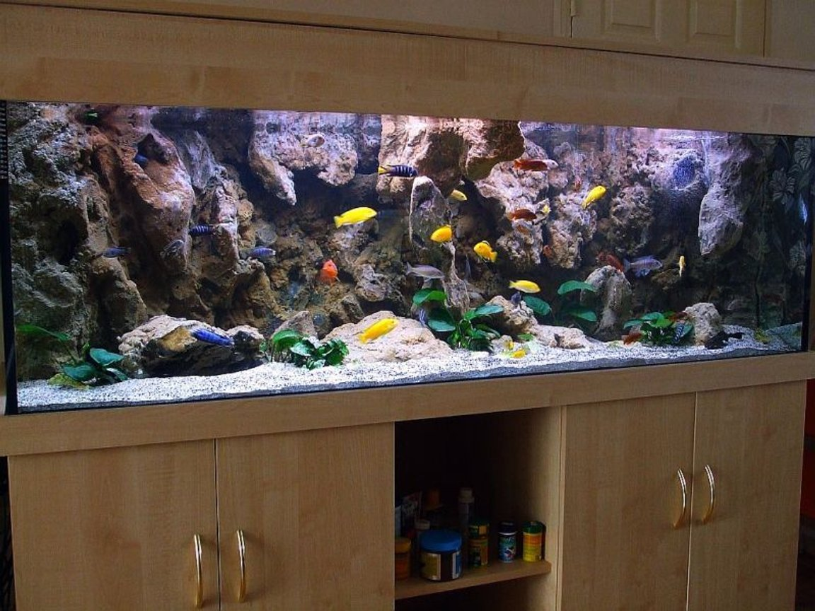 180 gallons freshwater fish tank (mostly fish and non-living decorations) - My new setup of Malawi cliff aquarium.
