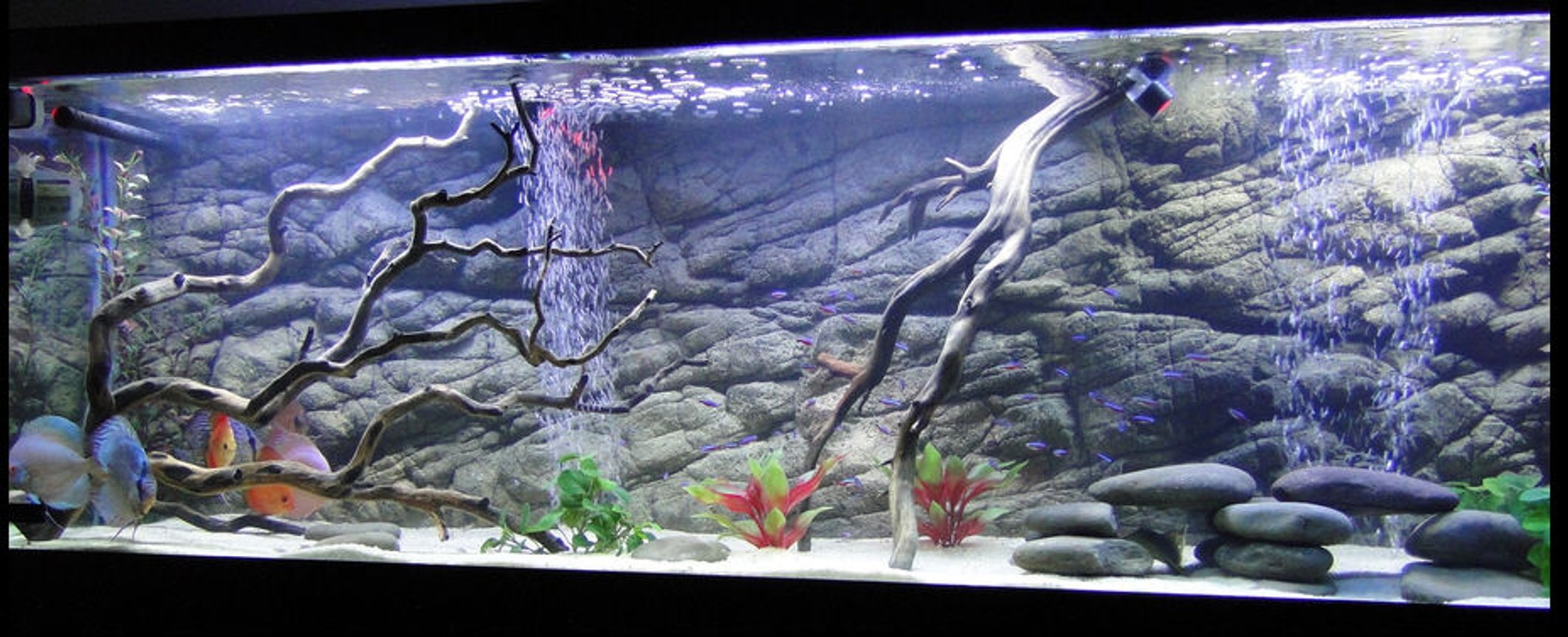 125 gallons freshwater fish tank (mostly fish and non-living decorations) - 125 Gallon Discus Tank