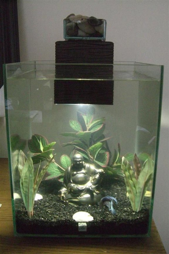 5 gallons freshwater fish tank (mostly fish and non-living decorations) - fluval chi tank