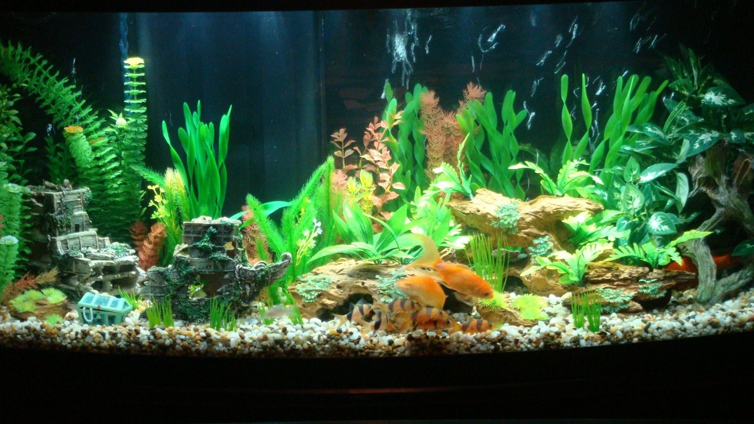 72 gallons freshwater fish tank (mostly fish and non-living decorations) - Tank Finally cycled. Fish now have a bigger home