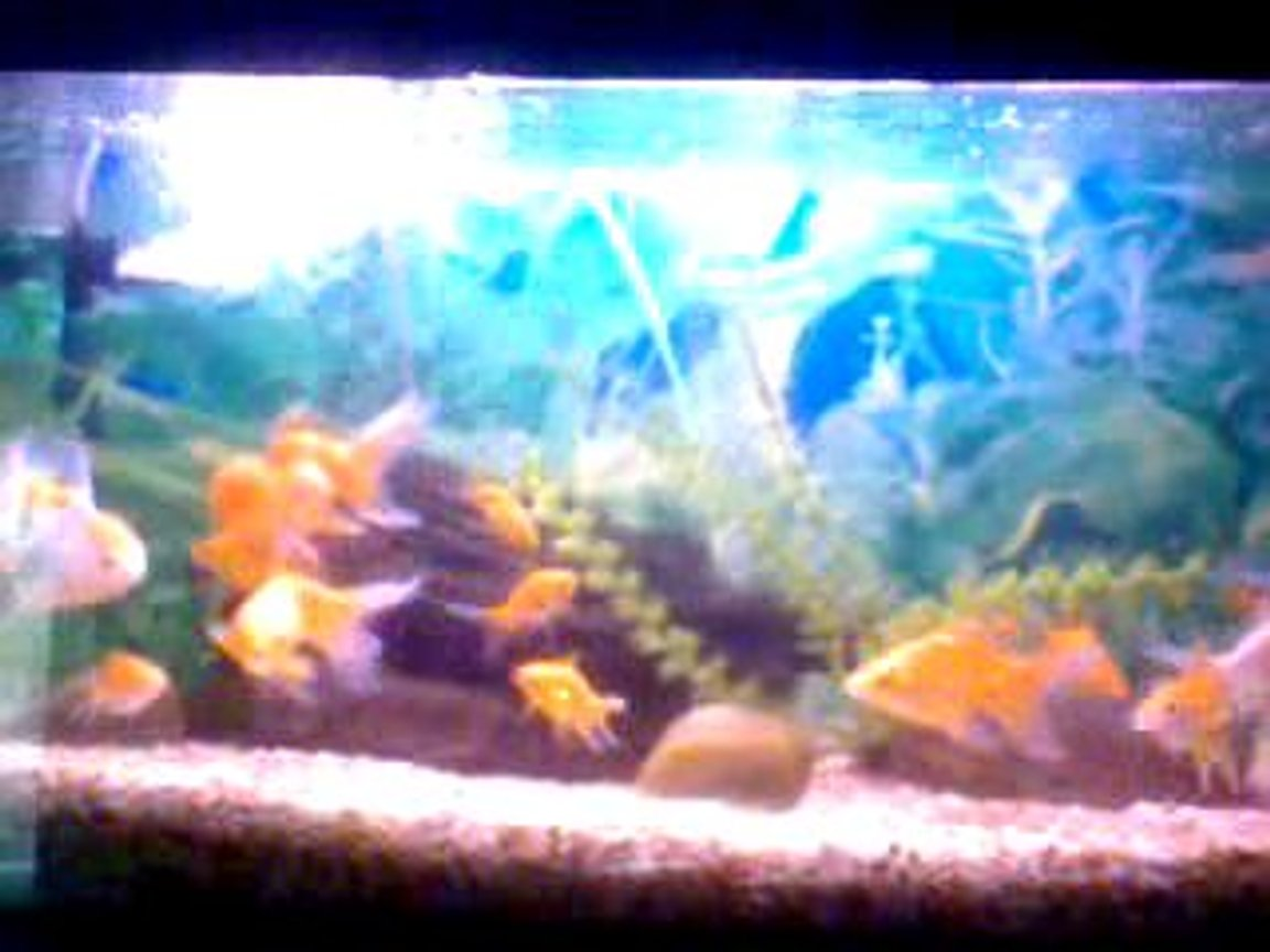 32 gallons freshwater fish tank (mostly fish and non-living decorations) - This pic has taken by a small Phone