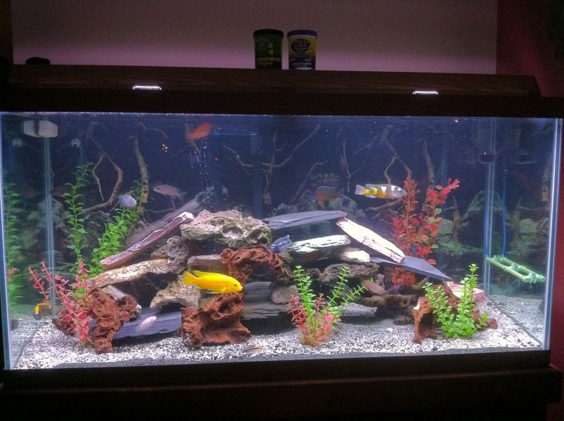 90 gallons freshwater fish tank (mostly fish and non-living decorations) - This is my 90 gallon fish tank that is prodominently african cichlids. Some of the fish include peacocks, tropheous, kibenesis, clown loach, red tail shark, catfish, lemon jack and many other africans. I run a fluval fx5 filter that i would highly reccomend. Thanks for looking at my fish tank and thanks for the votes.
