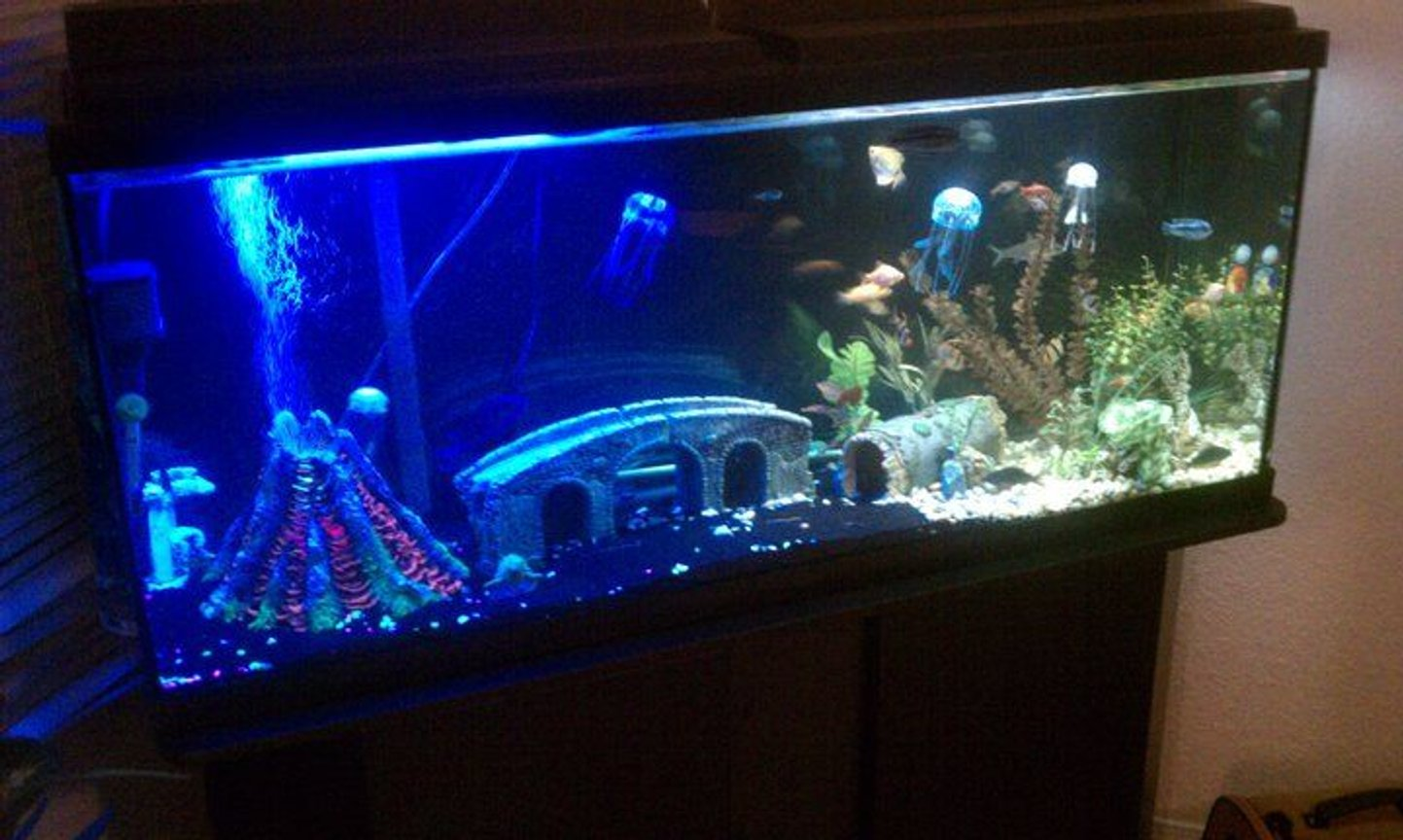 55 gallons freshwater fish tank (mostly fish and non-living decorations) - My 55gal