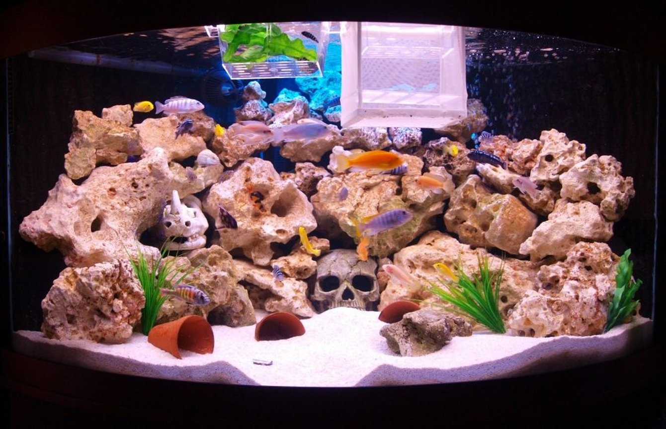90 gallons freshwater fish tank (mostly fish and non-living decorations) - this is my 350l african rift lake aquarium with ocean rock (and a couple of skulls the kids wanted in! ) also 2 breeding traps full of healthy brichardi and demasoni fry.