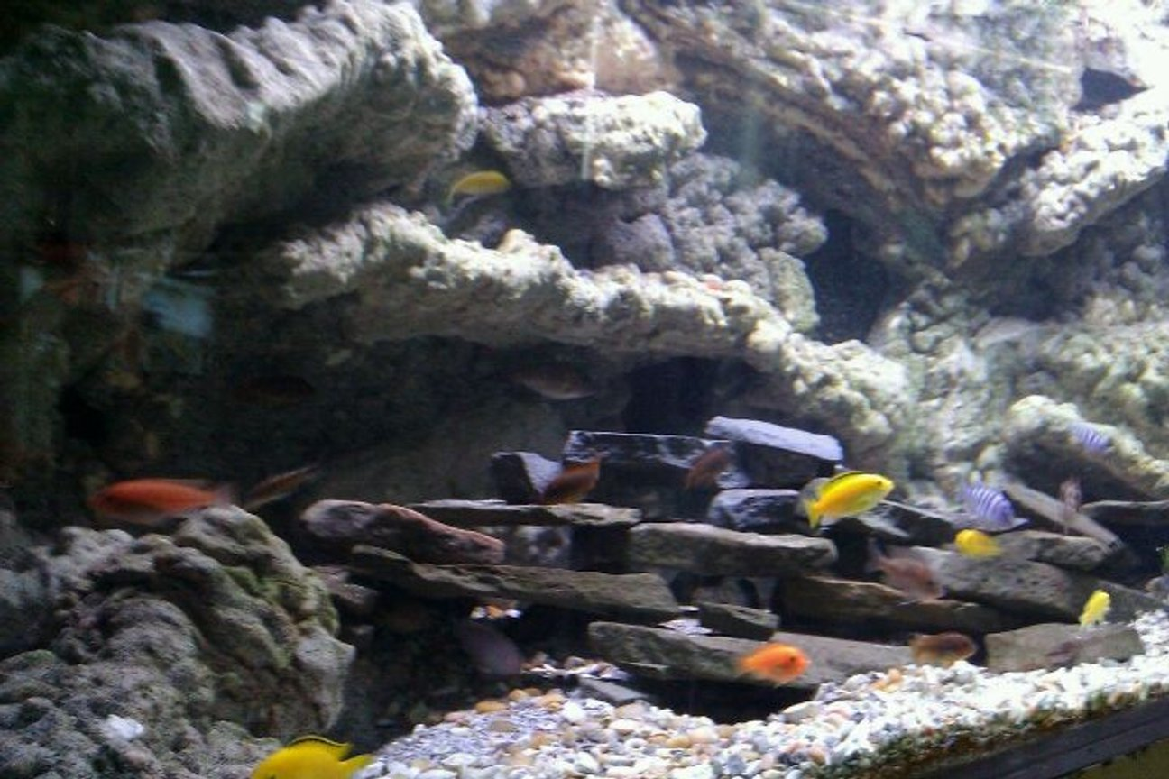 150 gallons freshwater fish tank (mostly fish and non-living decorations) - fish tank