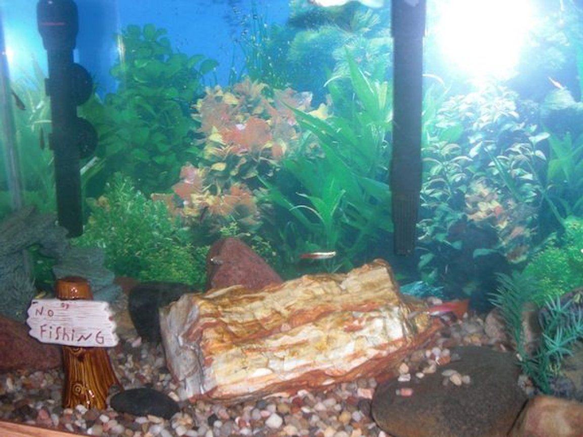 30 gallons freshwater fish tank (mostly fish and non-living decorations) - My Fish Tank