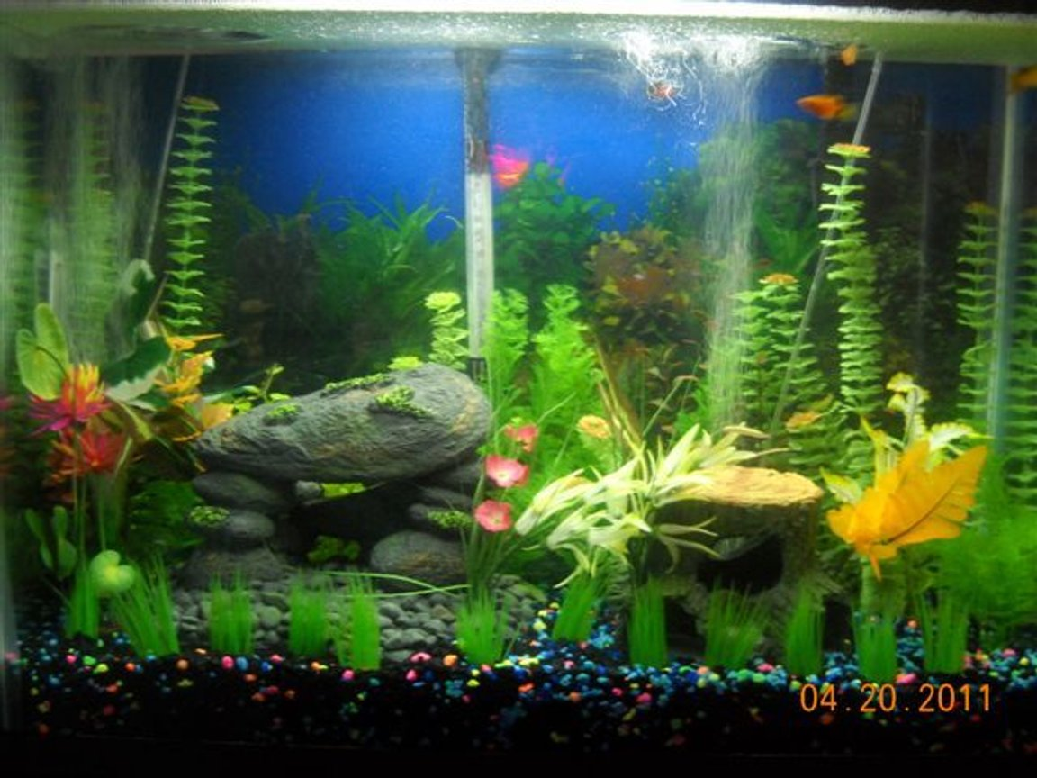 37 gallons freshwater fish tank (mostly fish and non-living decorations) - 37 GALLON MARINELAND LED LIGHTS 200W HEATER WHISPER 40 PUMP PENGUIN 200 FILTER