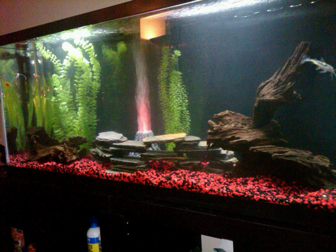 55 gallons freshwater fish tank (mostly fish and non-living decorations) - Mixed community tank.