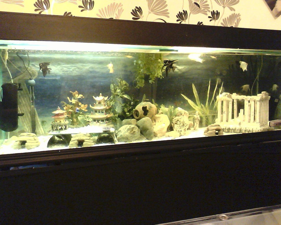 180 gallons freshwater fish tank (mostly fish and non-living decorations) - new set up