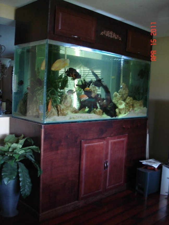 350 gallons freshwater fish tank (mostly fish and non-living decorations) - 350 gallon cichlid tank with 30+ cichlids from fry to 10 inches