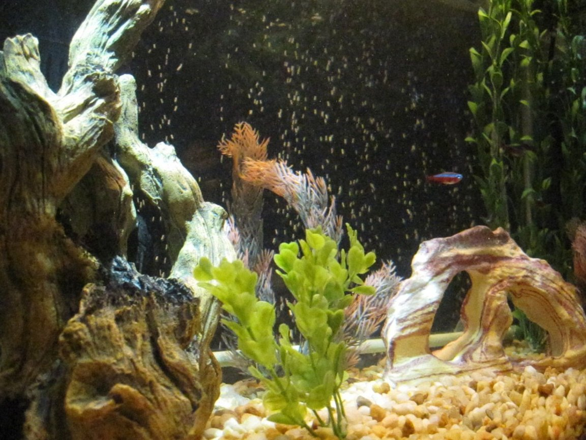 20 gallons freshwater fish tank (mostly fish and non-living decorations) - Another Point of View
