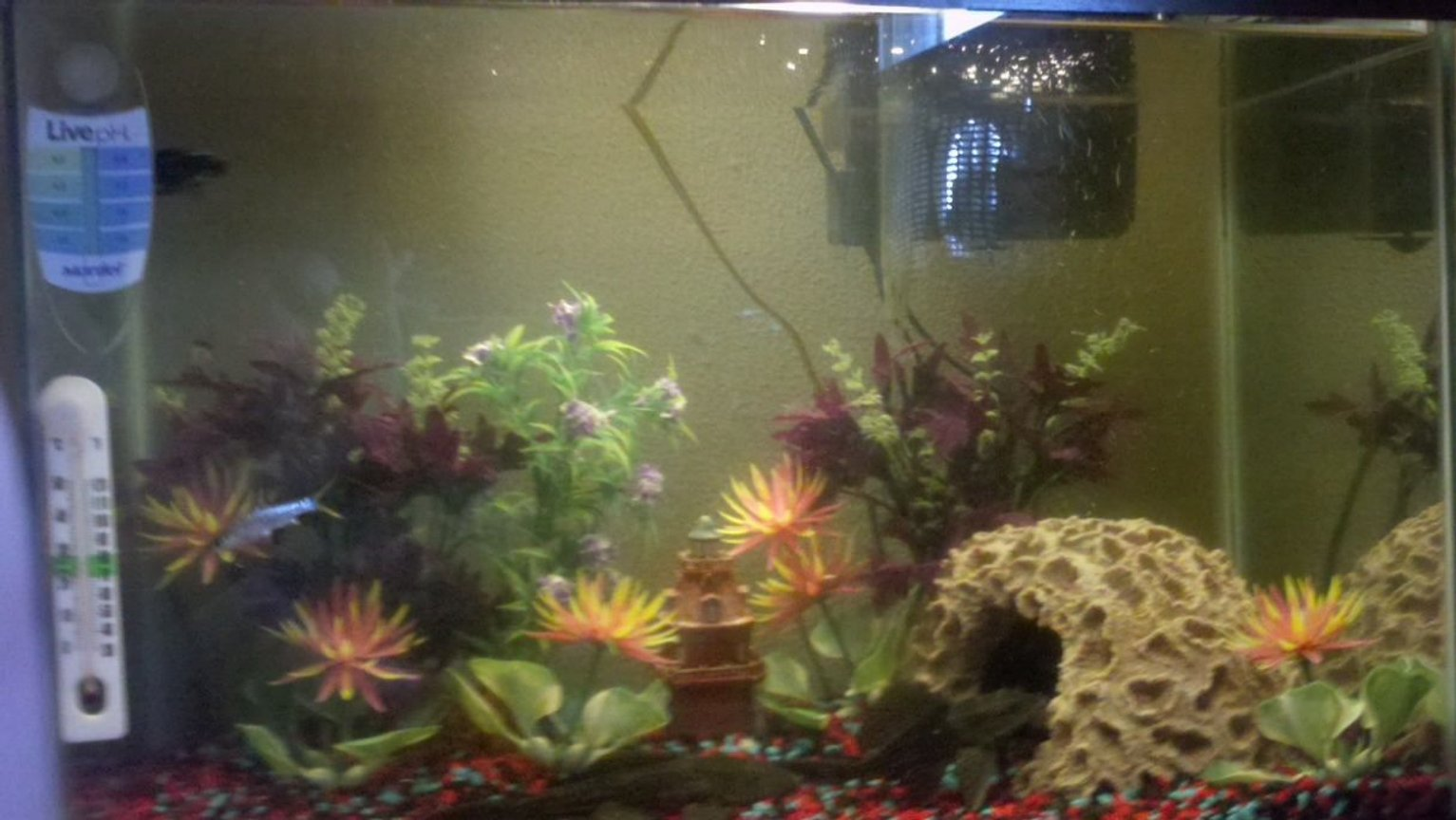 30 gallons freshwater fish tank (mostly fish and non-living decorations) - 30 Gallon tank...5 fish..had the tank about 2 years and having problems keeping fish alive...algae eaters lived thru everthinng..tough fish..can anyone give me so advice..thanks