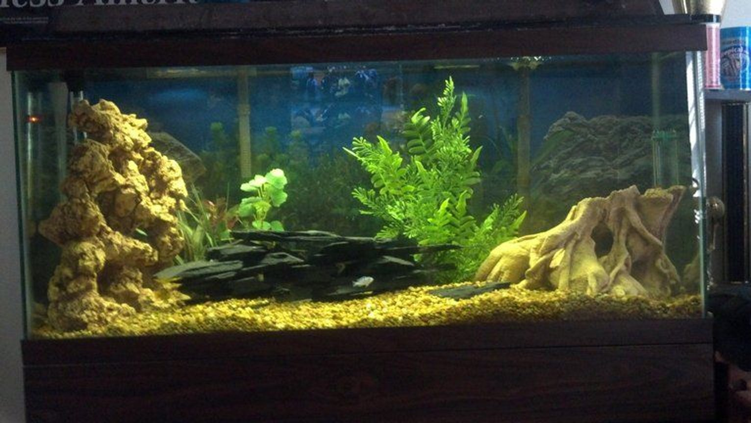 30 gallons freshwater fish tank (mostly fish and non-living decorations) - 1 kenyi 3 electric yellow would like to put 2 to 3 more fish in it. thinking about putting acei in it. suggestions would be appreciated
