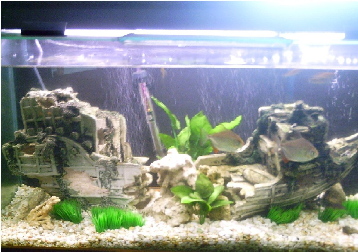 30 gallons freshwater fish tank (mostly fish and non-living decorations) - 4ft.....2 Silver Dollars, An Angelfish and several Danios