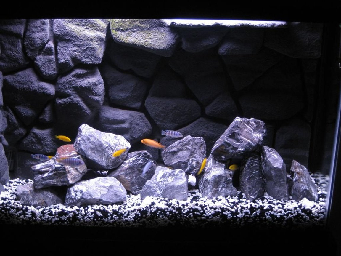45 gallons freshwater fish tank (mostly fish and non-living decorations) - My African Cichlid tank with homemade 3D background in 45 gallon tank.