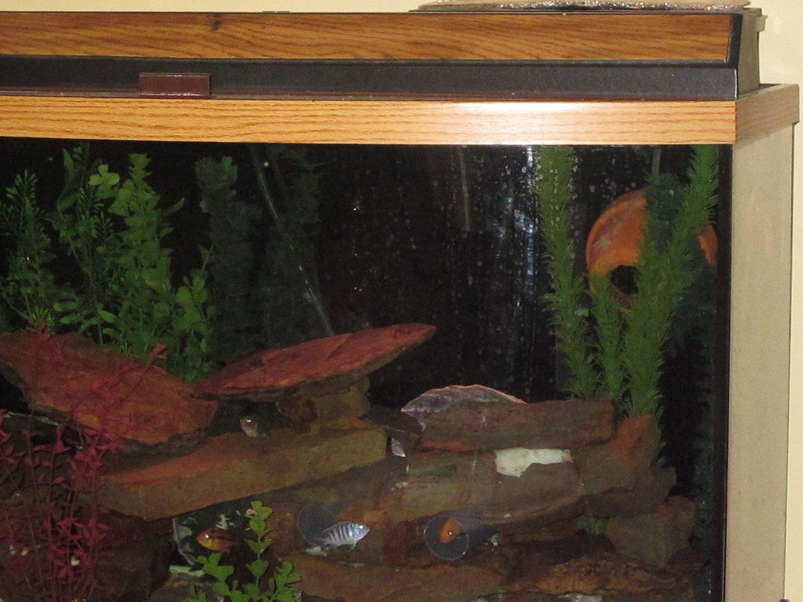 46 gallons freshwater fish tank (mostly fish and non-living decorations) - Hiding places