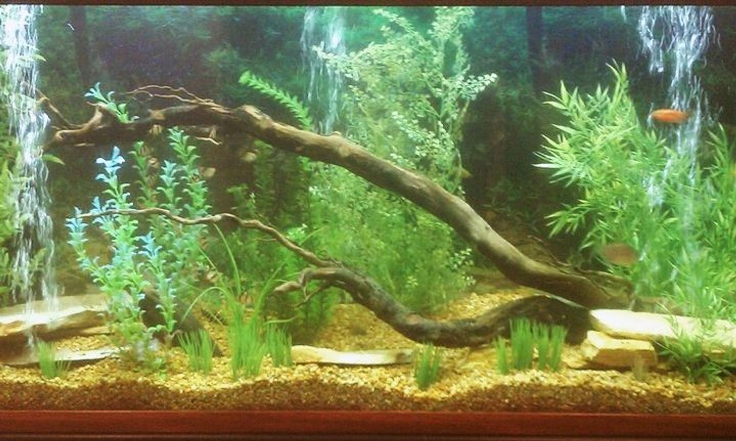 150 gallons freshwater fish tank (mostly fish and non-living decorations) - my 150 gallon fish tank