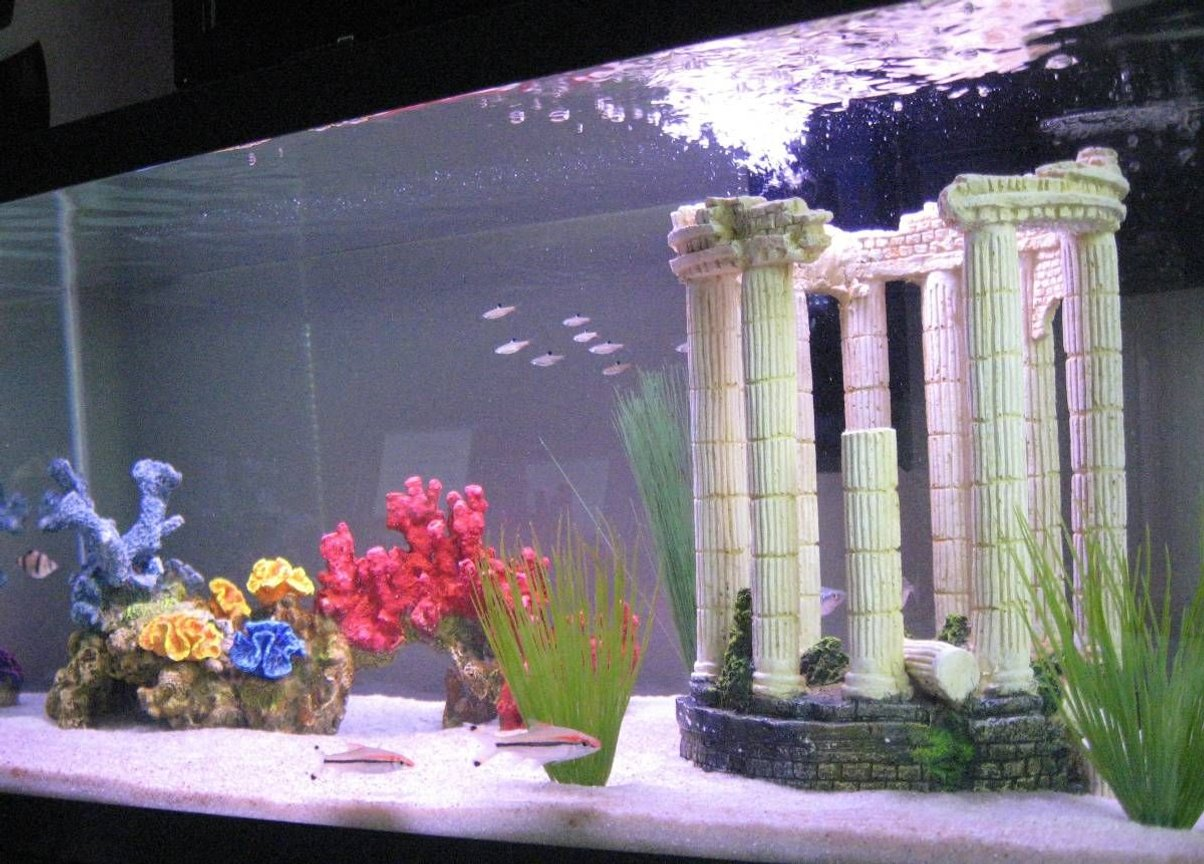 45 gallons freshwater fish tank (mostly fish and non-living decorations) - My Tropical Freshwater Aquarium
