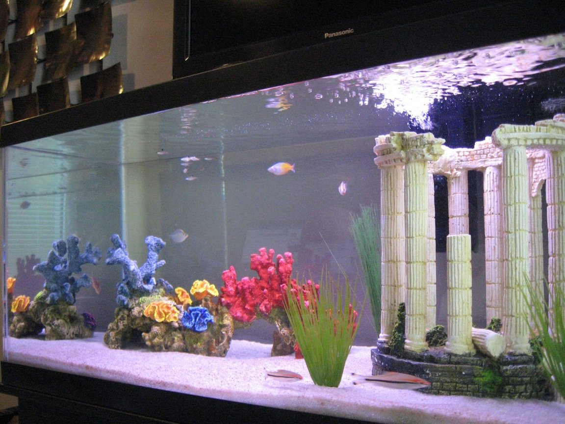 45 gallons freshwater fish tank (mostly fish and non-living decorations) - A shot of all the tank inhabitants
