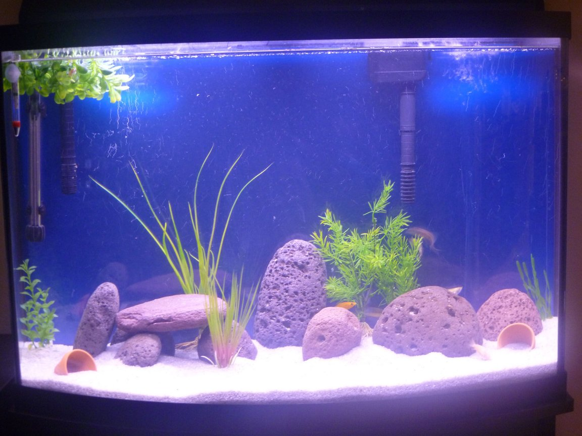 36 gallons freshwater fish tank (mostly fish and non-living decorations) - Just fed them, so that is why it's a bit dirty looking.