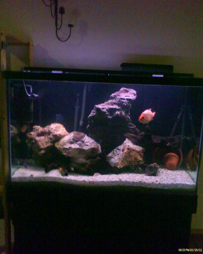 150 gallons freshwater fish tank (mostly fish and non-living decorations) - Full Pic from Cellular phone of big tank before rearrangement for Moorii Dolphin Cichlids