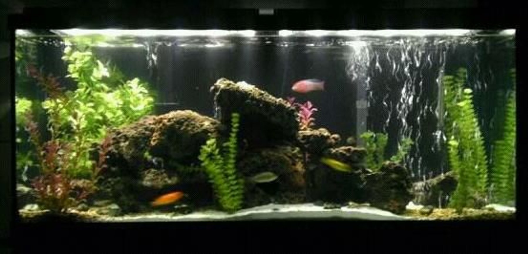 55 gallons freshwater fish tank (mostly fish and non-living decorations) - My Tank....