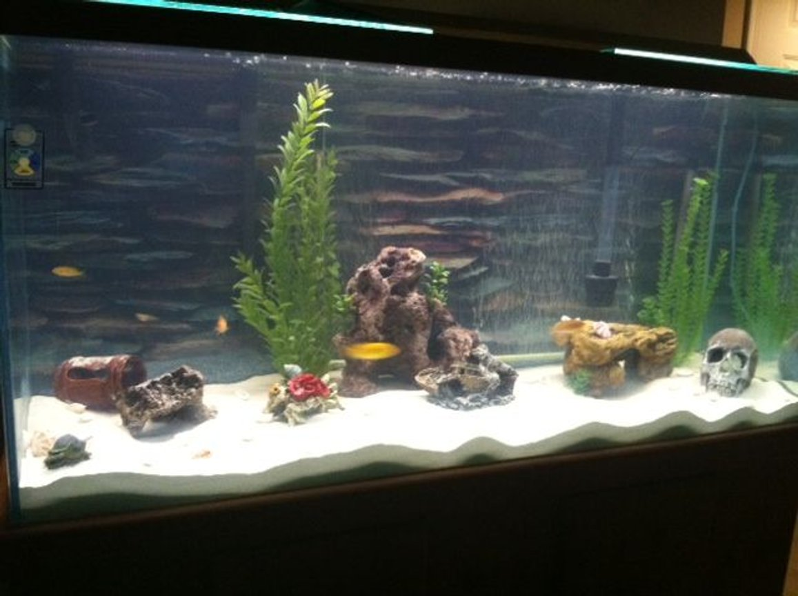 80 gallons freshwater fish tank (mostly fish and non-living decorations) - Here is the new look of the tank with sand