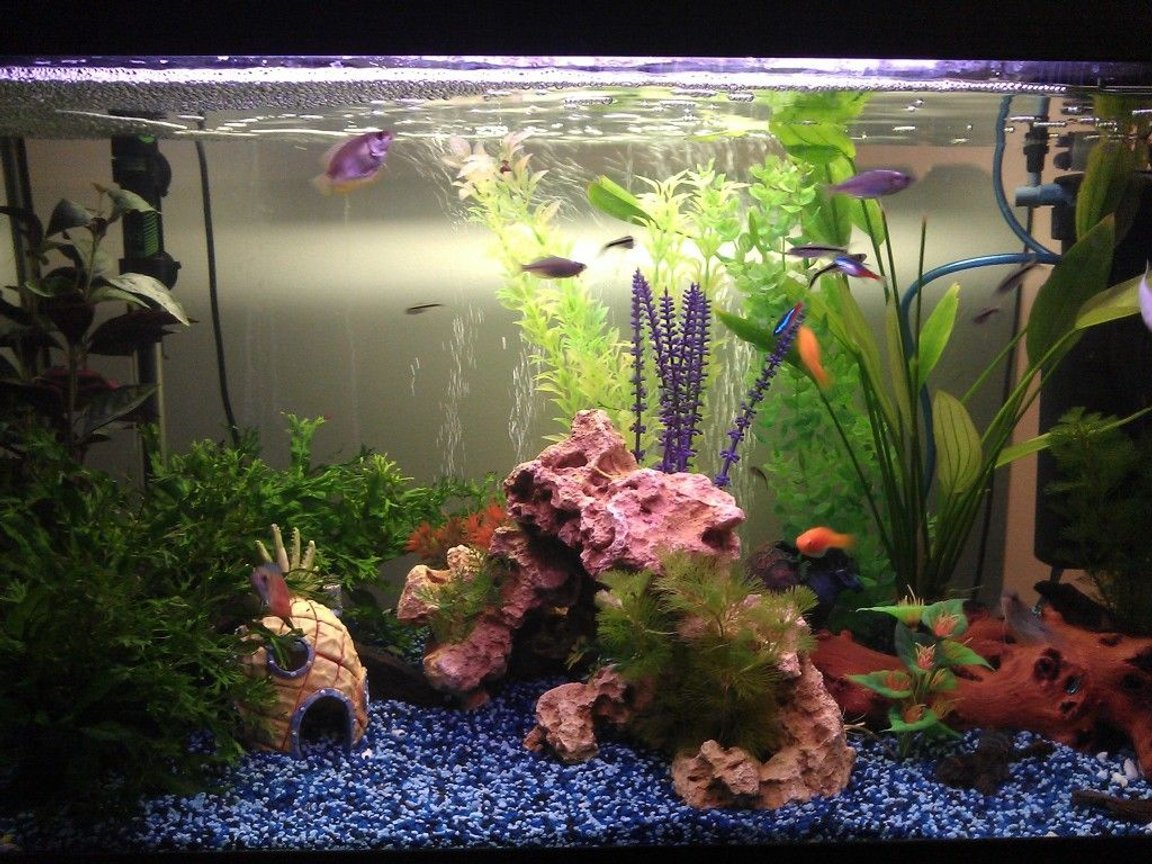 21 gallons freshwater fish tank (mostly fish and non-living decorations) - New gravel, plants, bogwood and decorations