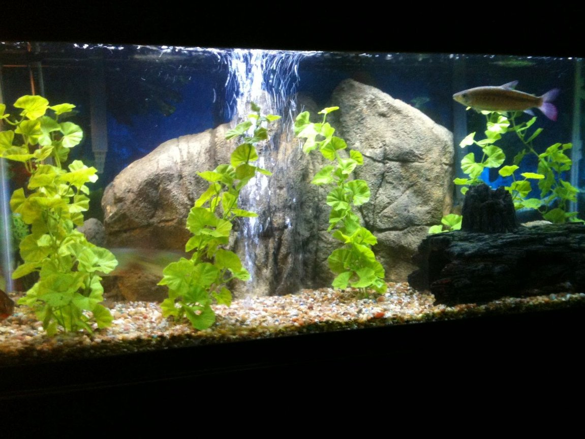 75 gallons freshwater fish tank (mostly fish and non-living decorations) - 75 Gallon fresh water