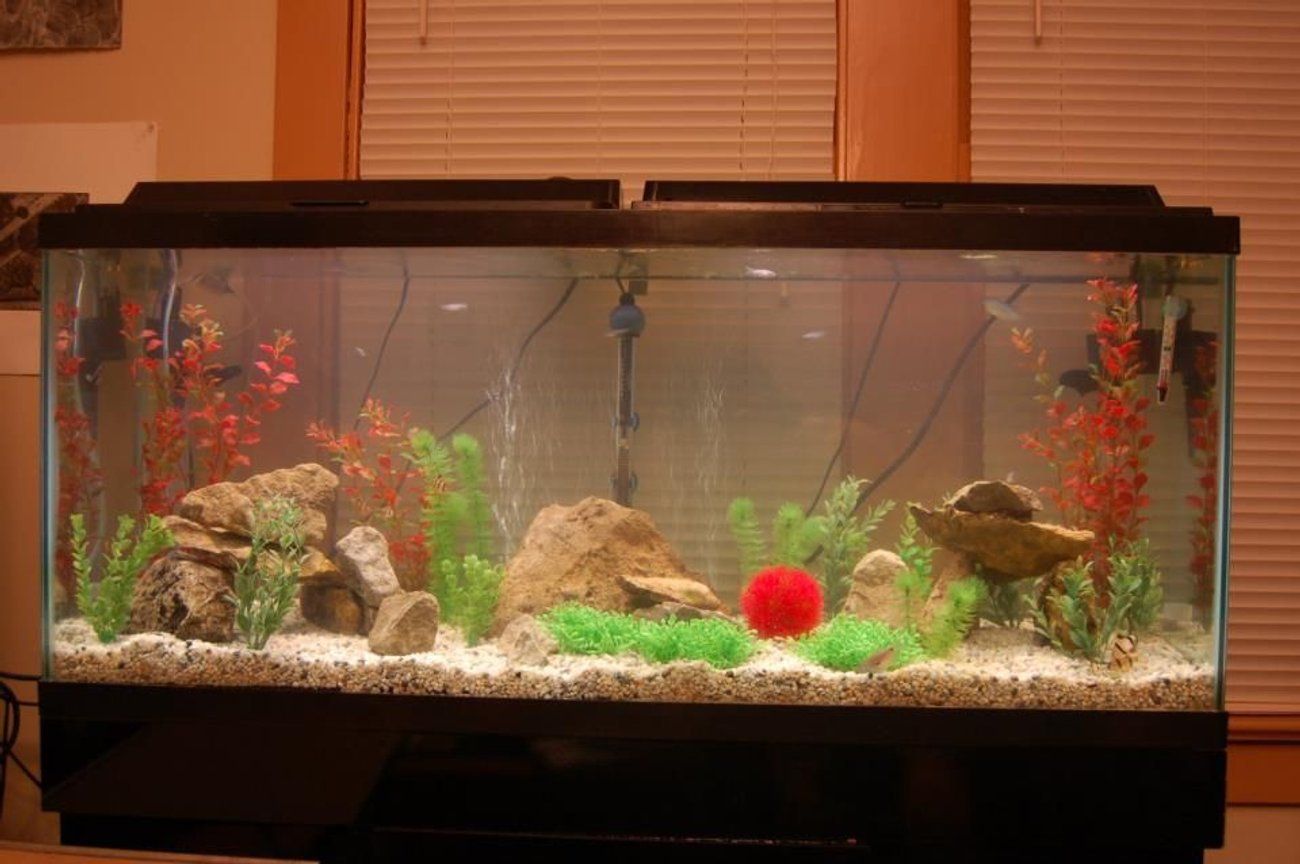 55 gallons freshwater fish tank (mostly fish and non-living decorations) - 55 gallon, with rocks and fake plants (for now)