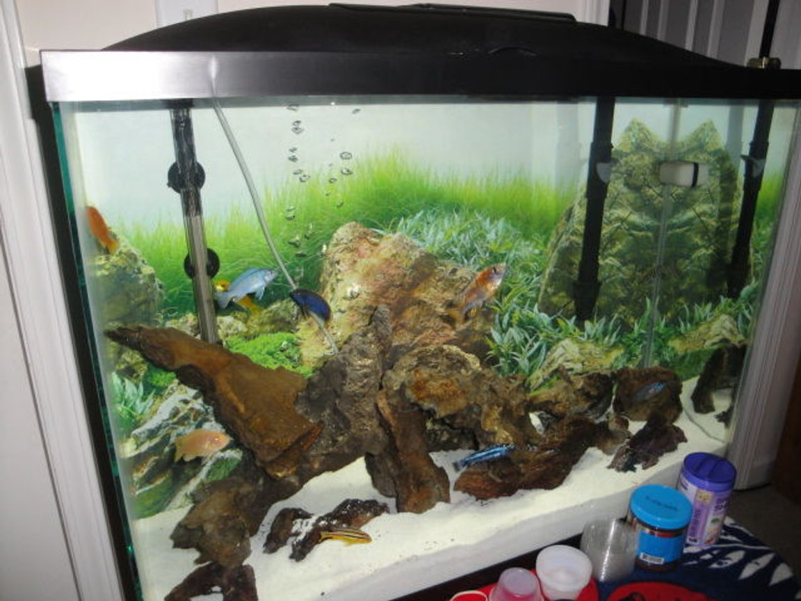 Photo 2 My Fish Aquarium You Can See Most Of The Fish He