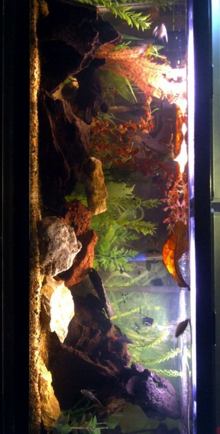 55 gallons freshwater fish tank (mostly fish and non-living decorations) - My Blackwater Aquarium