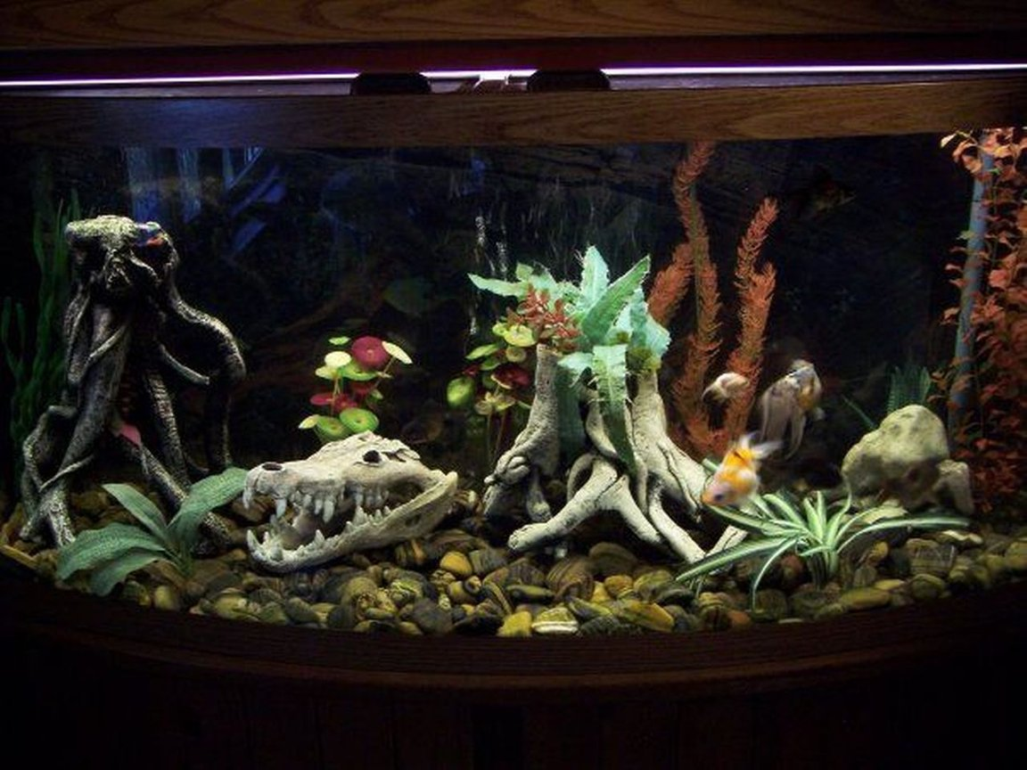 72 gallons freshwater fish tank (mostly fish and non-living decorations) - 72 Gallon