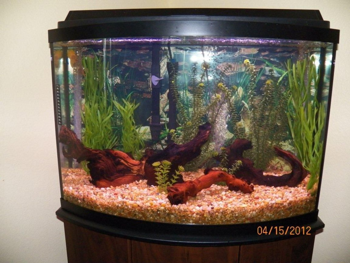 36 gallons freshwater fish tank (mostly fish and non-living decorations) - Set up for Discus