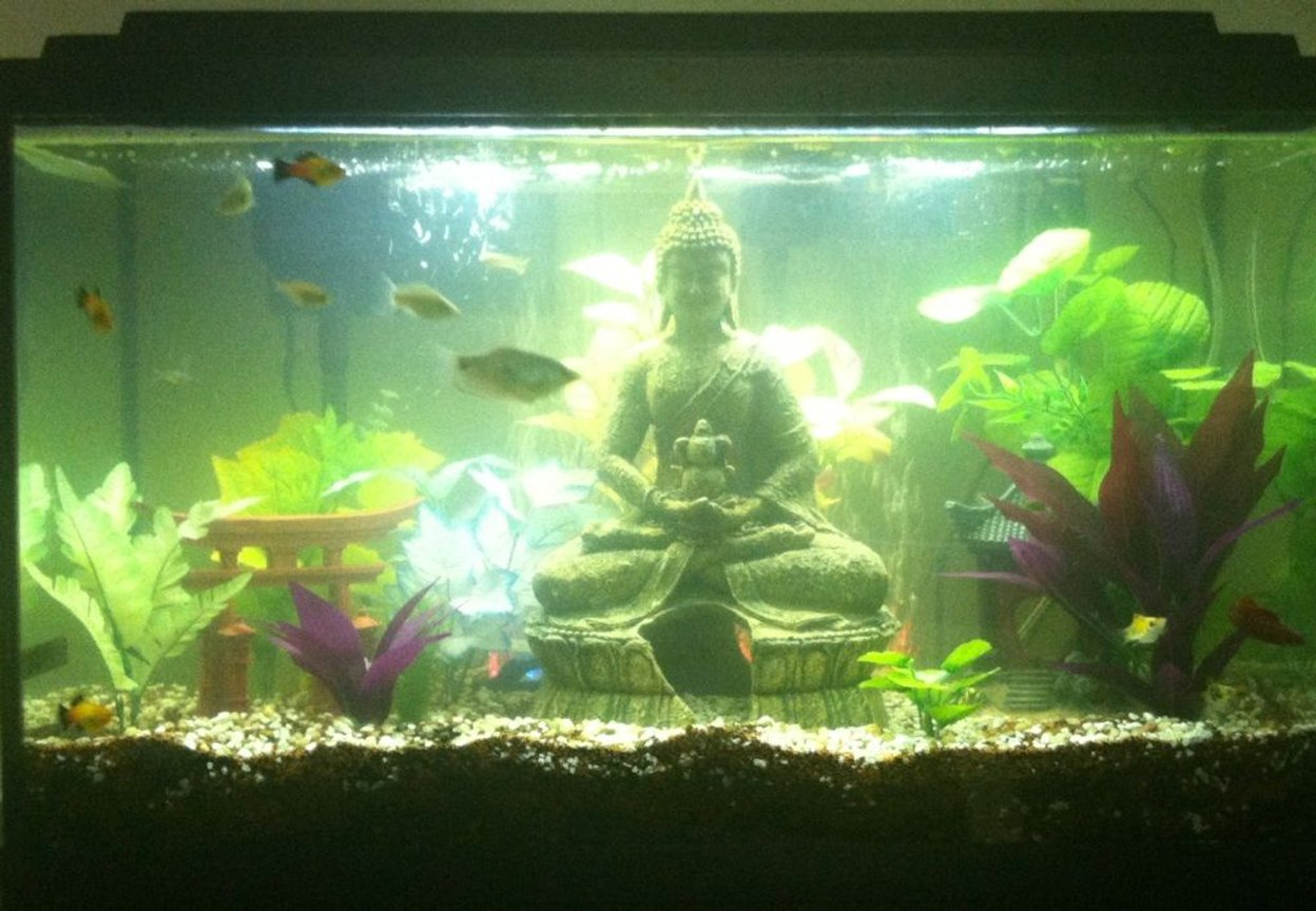 30 gallons freshwater fish tank (mostly fish and non-living decorations) - 30 Gallon Tropical Community