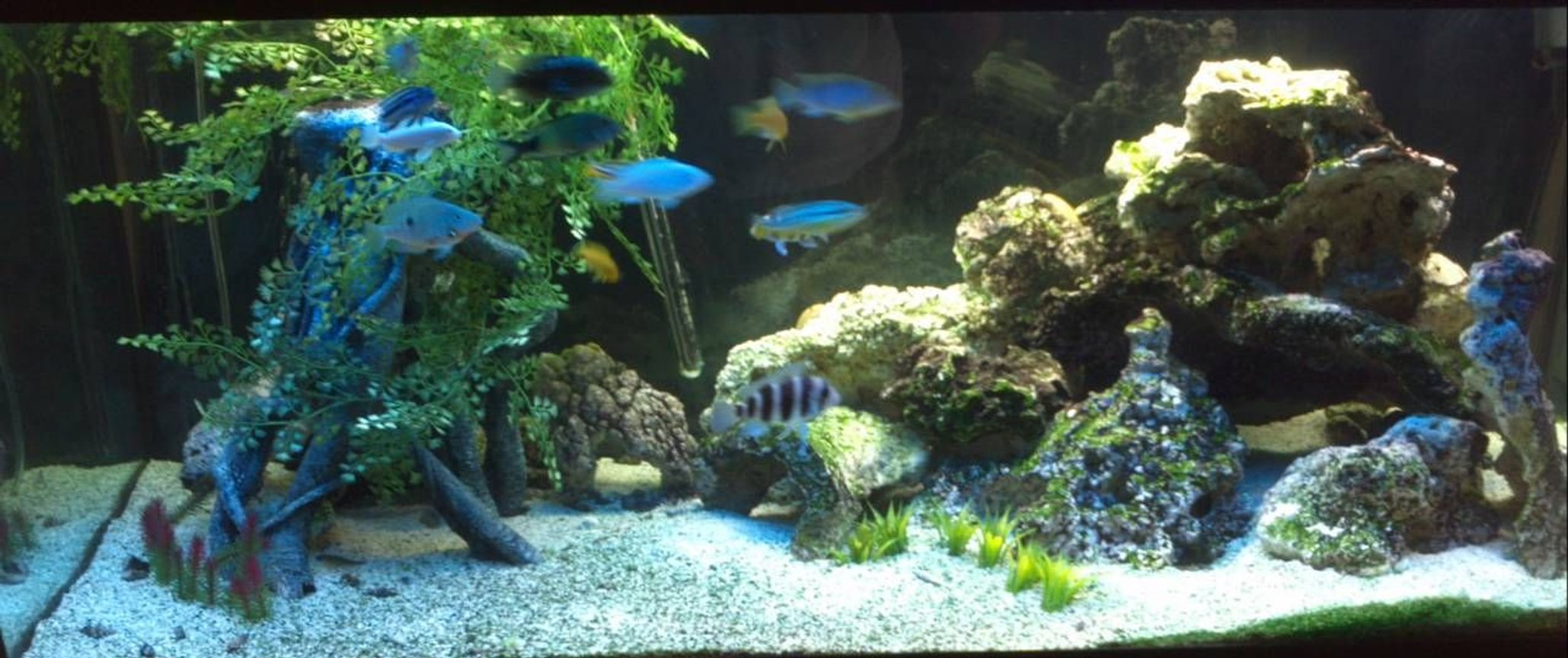 75 gallons freshwater fish tank (mostly fish and non-living decorations) - Mixed
