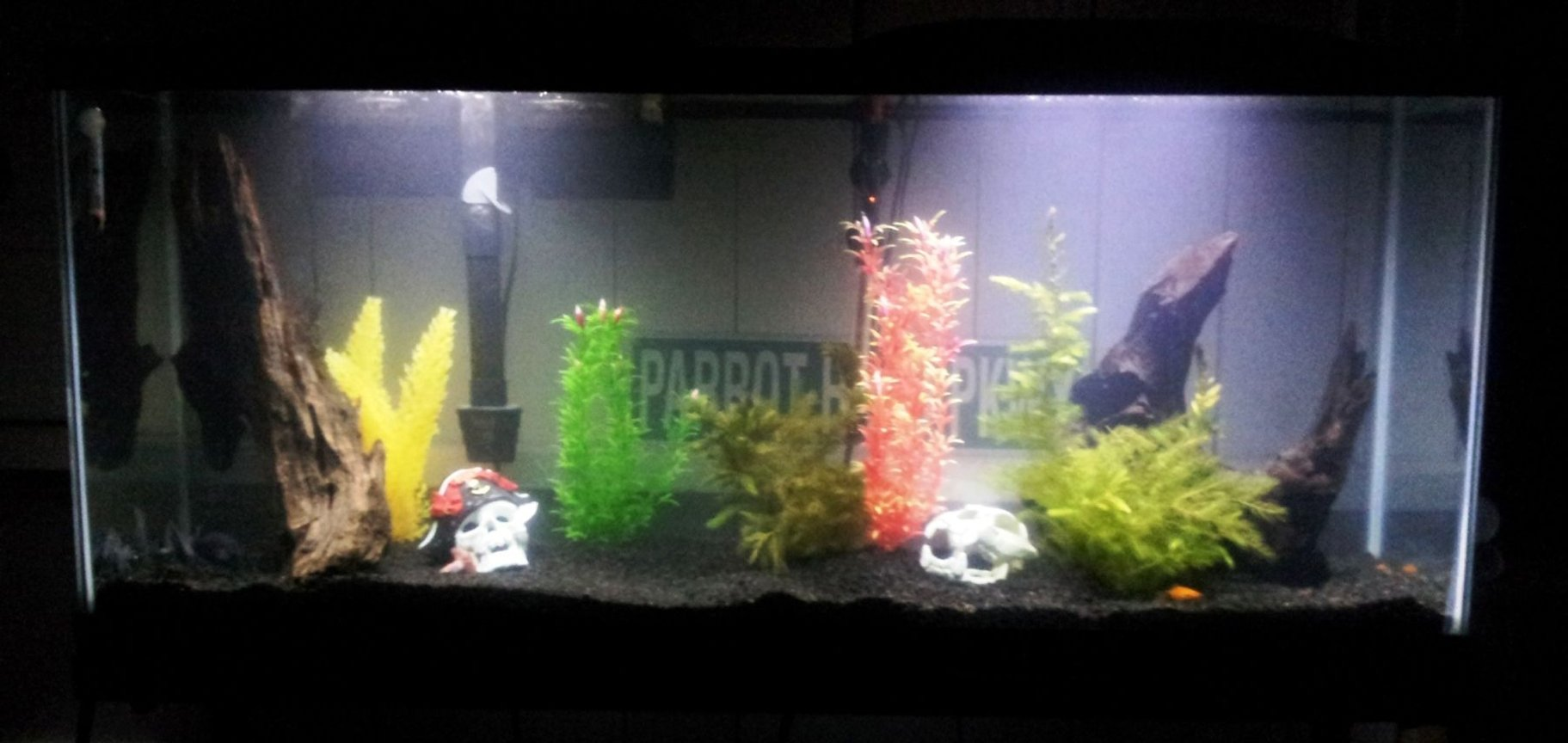 55 gallons freshwater fish tank (mostly fish and non-living decorations) - 2 Blue Diamond Discus, 2 Baby Blue Panda Discus, 2 Gold Twin-barred Platy, 1 Red Wag Platy, 1 Algae Eater