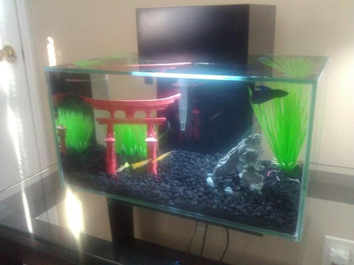 6 gallons freshwater fish tank (mostly fish and non-living decorations) - Fluval Edge - 6 Gallons. 3 Yellow-tail Guppies (male) 1 Veiltail Betta (male) I am new to aquariums, with the Fluval Edge 6-gallon being my first. I hope to expand into a bigger tank once I get the hang of everything.